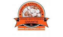 Bracelet rigide argent oeil de sainte lucie méditerranéen